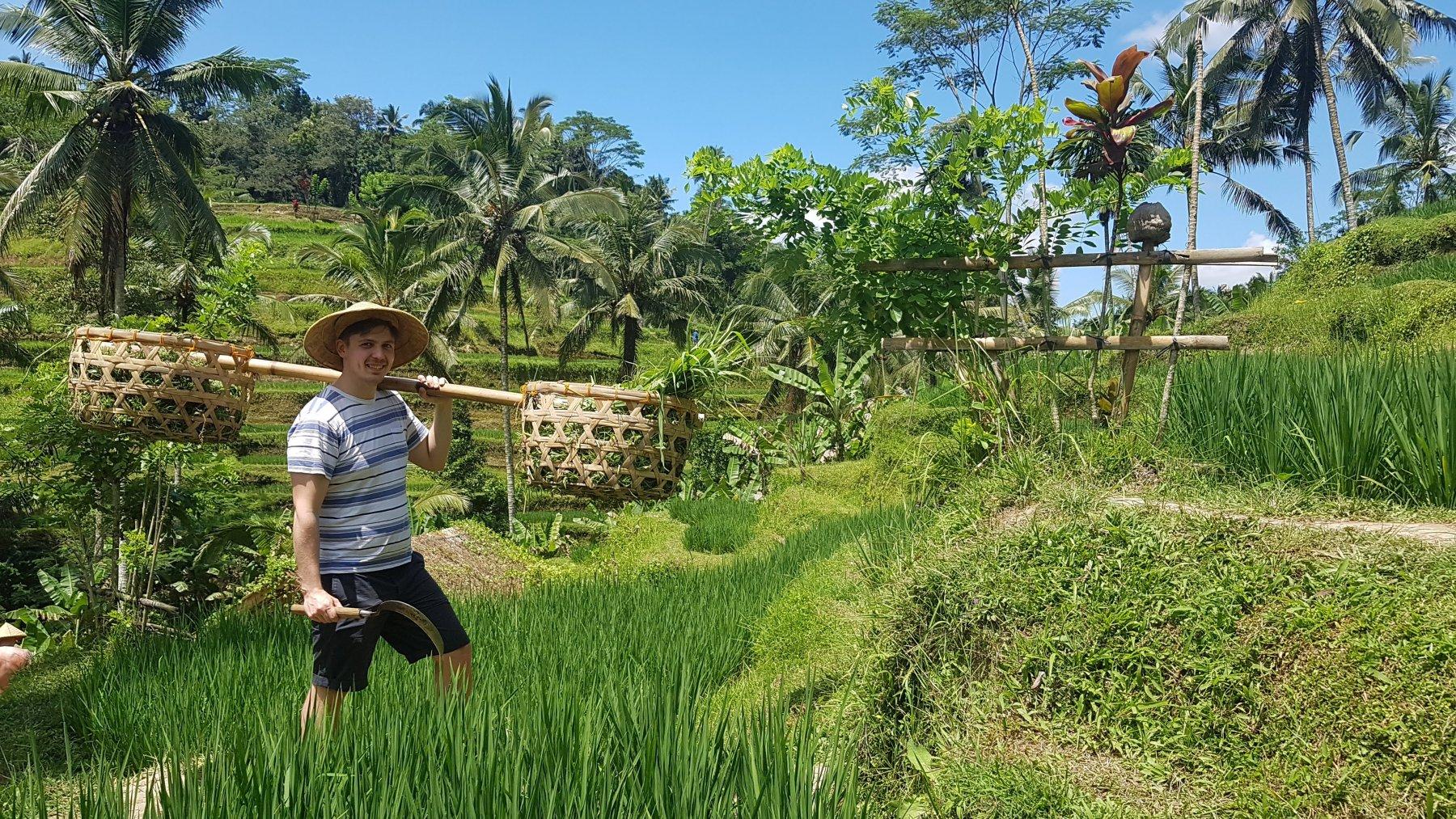 Marek sklízí rýži v Tegalalang