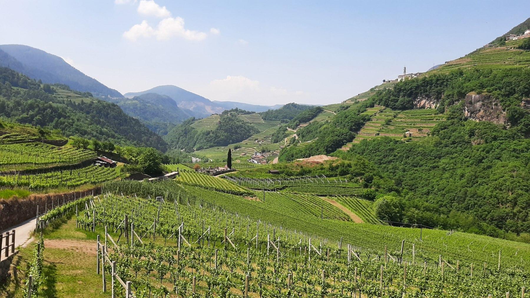 Vinice v Dolomitech
