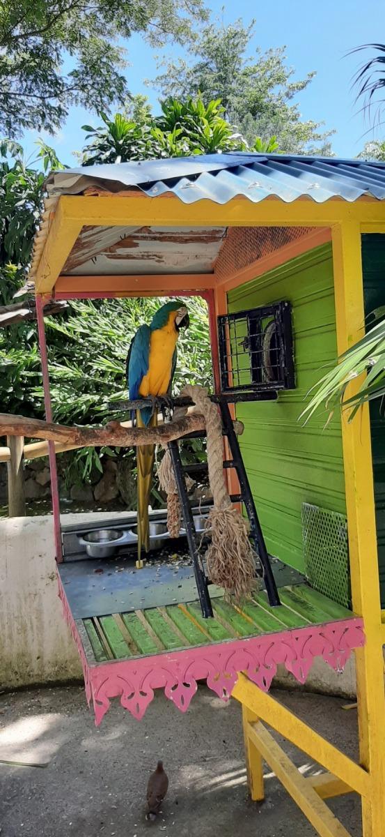 Papoušek v botanické zahradě
