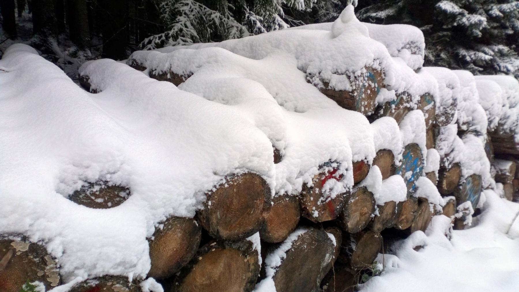 Dřevo pod sněhem