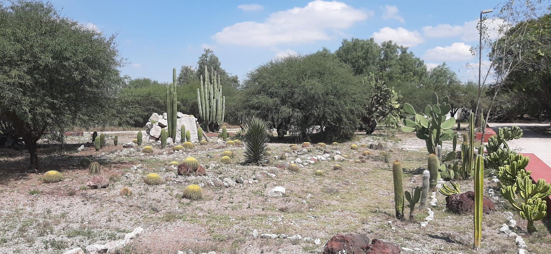 Kaktusy v Tule