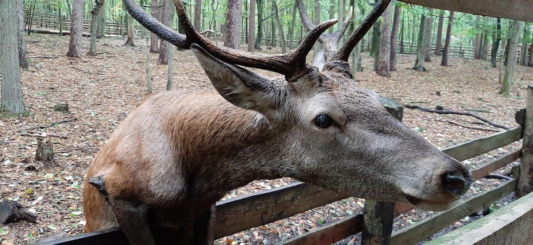 Jelen ve Woliński Park Narodowy
