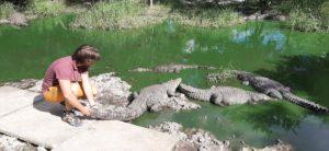 Yucatán krokodýl