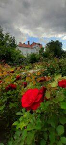 Ružový park v Trnavě